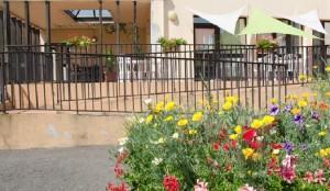 fleurs terrasse glycines